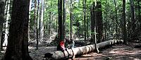 Ferien am Nationalpark Bayerischer Wald